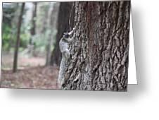 Fox Squirrel Vertical Greeting Card