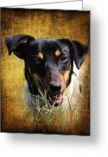 Fox Terrier Dog Greeting Card