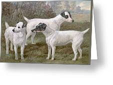 Fox Terriers Greeting Card