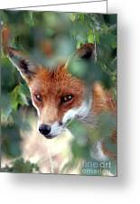 Fox Through Trees Greeting Card by Tim Gainey