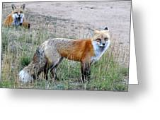 Fox Twins Greeting Card