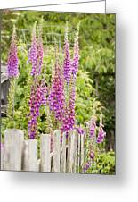 Foxglove Fence Greeting Card by Anne Gilbert