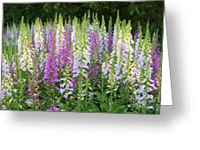 Foxglove Garden In Golden Gate Park Greeting Card