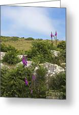 Foxgloves And Cows Greeting Card