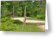 Foxgloves In New Forest Greeting Card