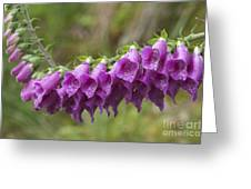 Foxgloves Greeting Card