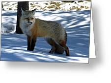 Foxy Shadows Greeting Card