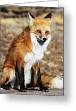 Foxy Greeting Card by Shane Bechler