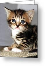 Foxy The Kittens Big Eyes Greeting Card