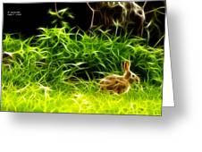 Fractal - California Hare - 1925 Greeting Card