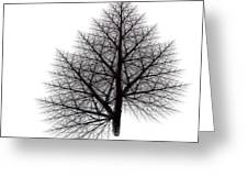 Fractal Essence Of A Tree Greeting Card