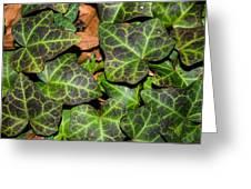 Fractal Ivy Greeting Card