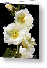 Fragile Flower Greeting Card