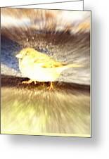 Like A Bird Or A Fragile Pedestrian Greeting Card