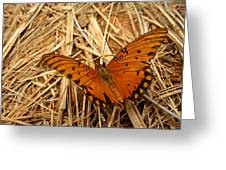 Fragile Wings Greeting Card