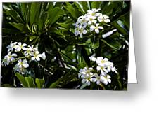 Fragrant Clusters Greeting Card