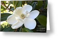 Fragrant Magnolia Greeting Card