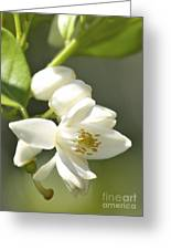 Fragrant Orange Blossoms Greeting Card