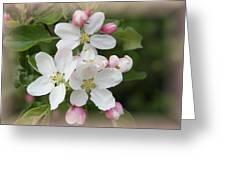 Framed Apple Blossom Greeting Card