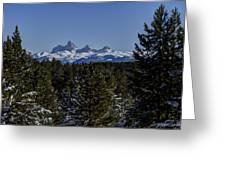 Framed In The Pines Greeting Card