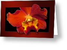 Framed Red Orchid  Greeting Card