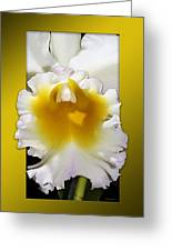 Framed White Orchid Greeting Card