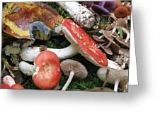 France Mushrooms From The Woods Greeting Card