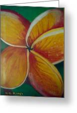 Frangipani Bloom Greeting Card