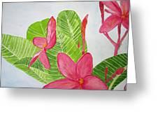 Frangipani Tree Greeting Card