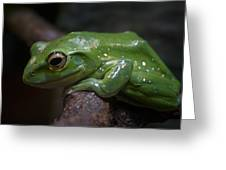 Freddy The Frog Greeting Card