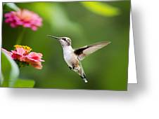 Free As A Bird Hummingbird Greeting Card