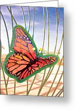 Free Butterfly Fly Greeting Card
