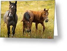 Free Happy Horse Joy On Samsoe Island Denmark  Greeting Card