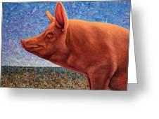 Free Range Pig Greeting Card