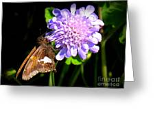 Silver Spotted Skipper Greeting Card