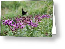 Freedom By Jrr Greeting Card
