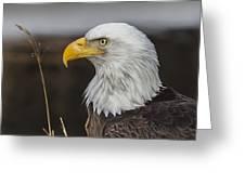 Freedom's Spirit Greeting Card