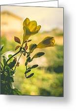 Freesia Greeting Card by Marco Oliveira