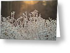 Freezing Cold Greeting Card by Karen Grist