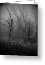 Freezing Rogue Valley Fog At Night Greeting Card