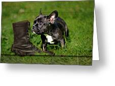 French Bulldogs Greeting Card by Heike Hultsch