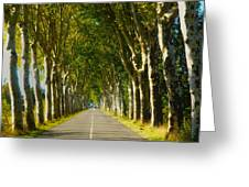 French Road Near Gaillac Greeting Card