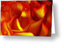 Fresh Bloom Greeting Card by Tom Druin