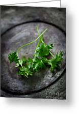 Fresh Celery Greeting Card by Mythja  Photography
