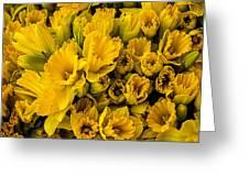 Fresh Daffodils  Greeting Card