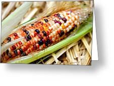 Fresh Decorative Indian Corn Greeting Card