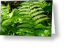 Fresh Fern - Featured 2 Greeting Card