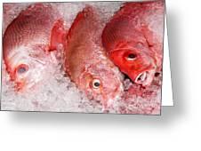 Fresh Fish 05 Greeting Card