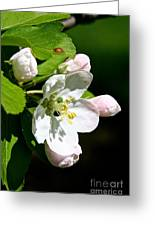Fresh Fruit Blossoms Greeting Card