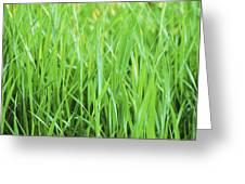 Fresh Grass Greeting Card